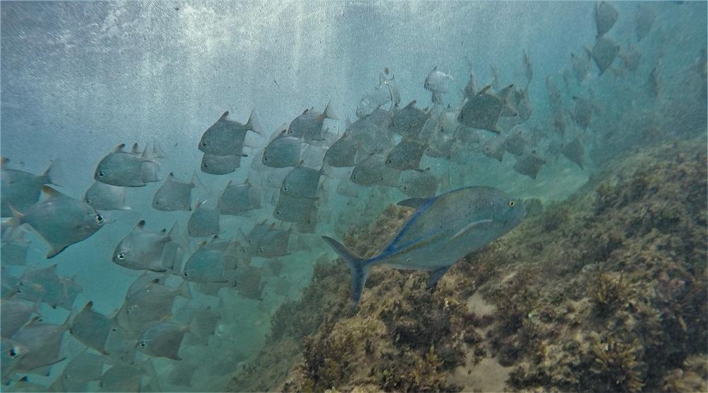 Snorkeling Cape Vidal, SA