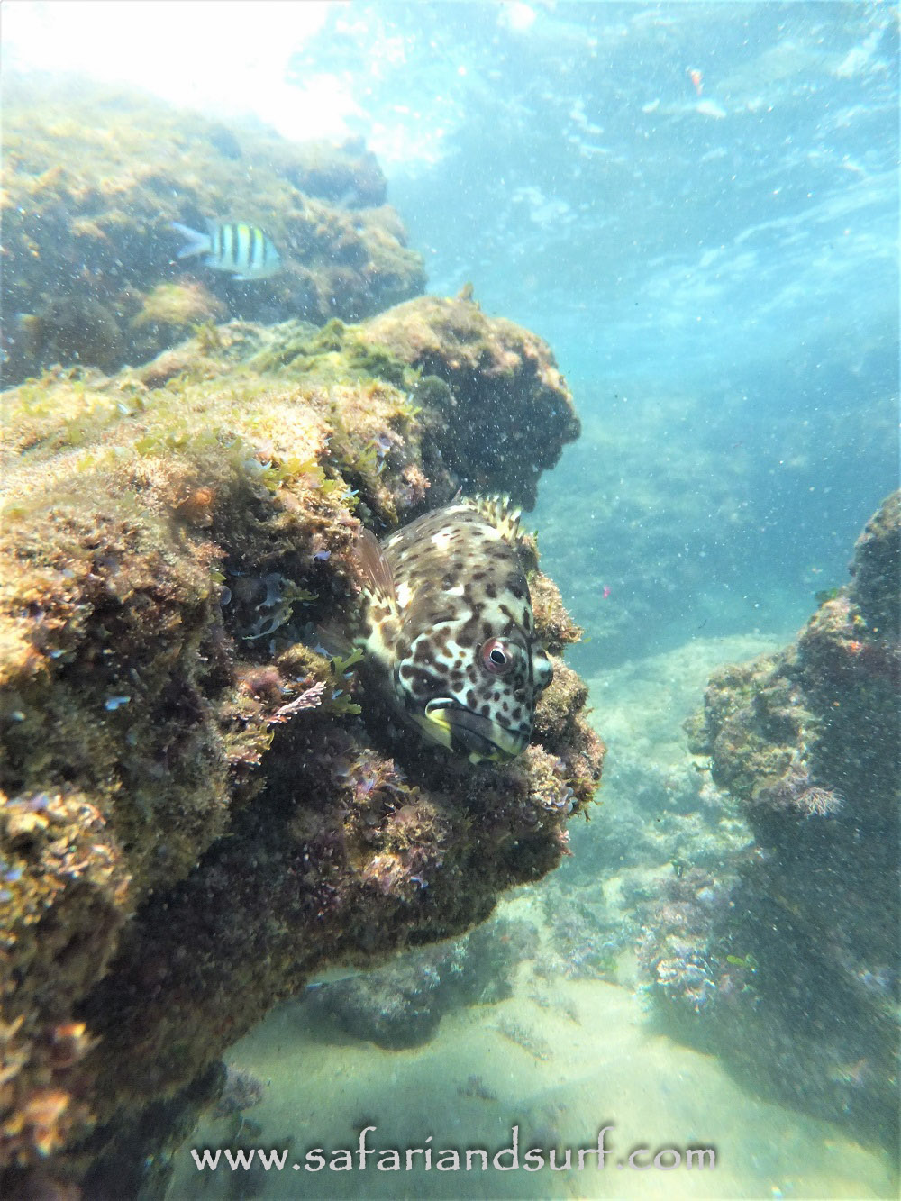 Cape Vidal, South Africa Snorkeling