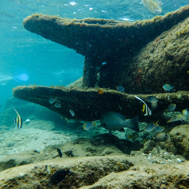 "Snorkeling tours at Cape Vidal sometimes reveal sightings of the legendary ""Dorothea"" shipwreck. It was believed to have carried a heavy load of gold when it went under."
