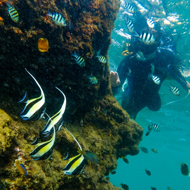 On average we get to see about 55 - 65 different species of fish when snorkeling at Cape Vidal.
