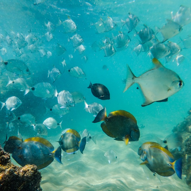 What can you see when snorkeling in Cape Vidal? Cape Vidal offer some incredible diversity of species! It is rated as one of the best snorkeling destinations in South Africa.